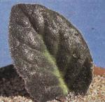 Бережливые растения
